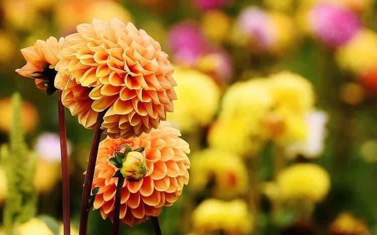 healthy-flowers