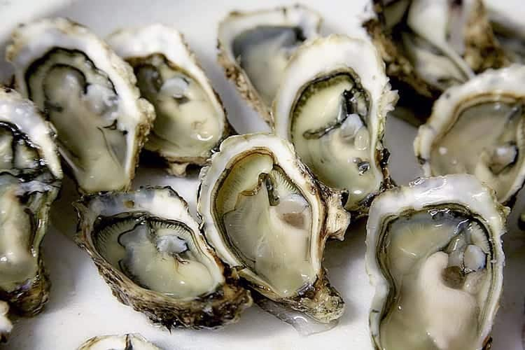 how-to-shuck-an-oyster